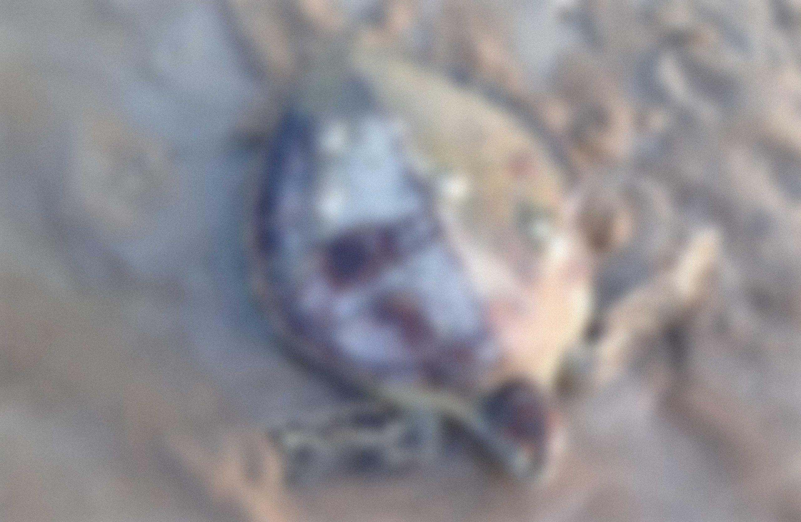 خالد الفيلكاوي, الكويت (السلاحف)