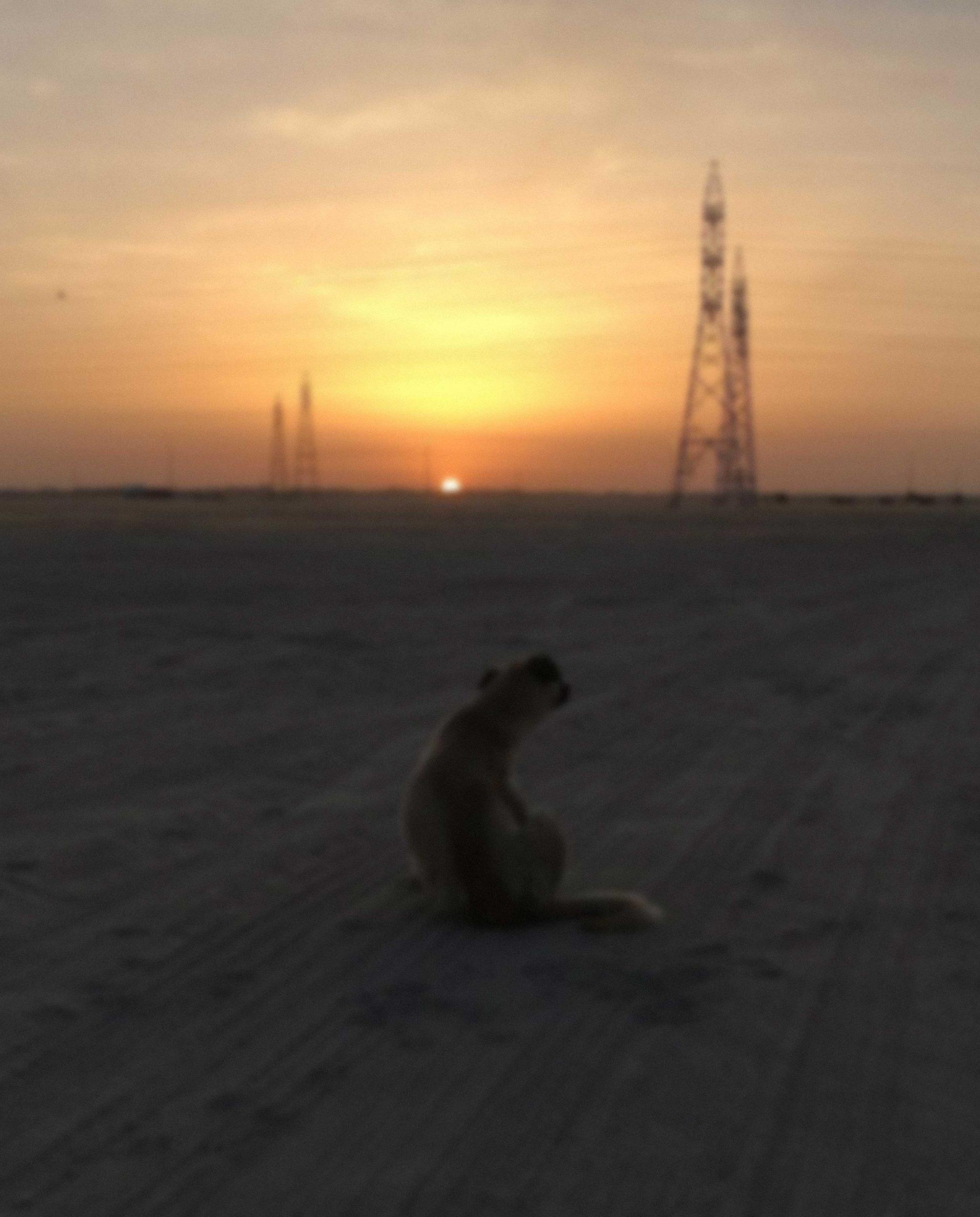 أحمد عاطف, الكويت